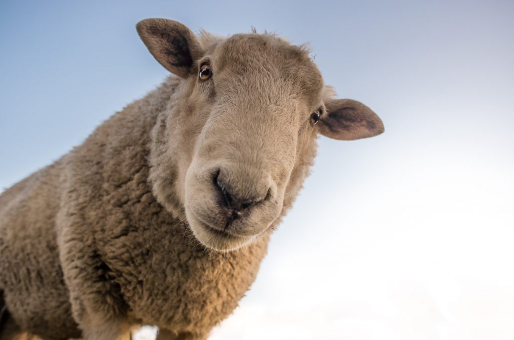 I Am The One - Lost Sheep Parable